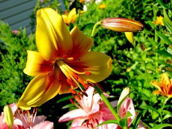 Lule dhe vetëm lule! IPeQQ5xzHKryYOivifA178MU5xjyR-pLod2cNryK5agp3Xa-rcSZRg==